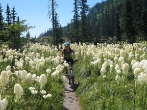 Dara riding through bear grass at Red Rock